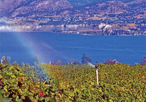 navodnjavanje vinograda
