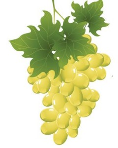 vinska desavanja